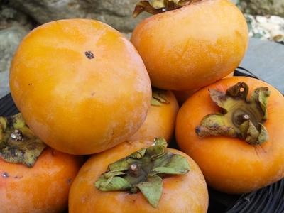 とっても甘い!自然農法産柿【川崎横山農園産/次郎柿・富有柿/1キロ】