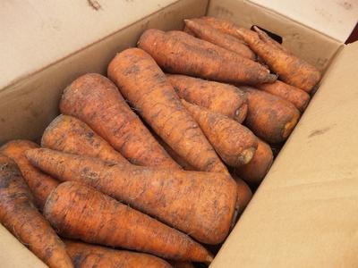 北海道から産地直送!自然栽培野菜セット【ニンジン15キロ/中部まで送料込み】