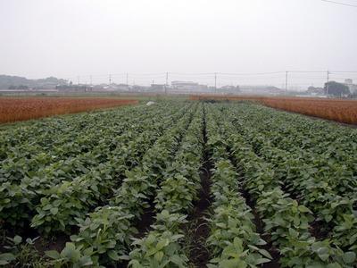 令和元年産 特別栽培玄米(コシヒカリ/長野産)【5kg】
