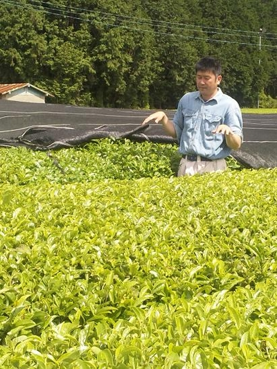 自然栽培やぶきた種使用煎茶「蒼(あお)」【80g/熊本産】