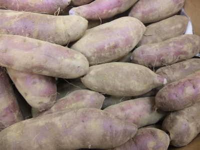 無農薬30年以上 とみちゃんの紫サツマイモ【神奈川県川崎市/10kg】