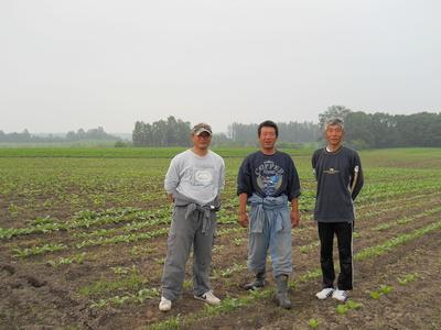 【代引き不可】北海道から産地直送!自然栽培大根【土付き/10キロ】