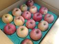 訳あり!有機りんご農家さんのりんご【ふじ】有機認証なし【青森産/小箱/1段積み】