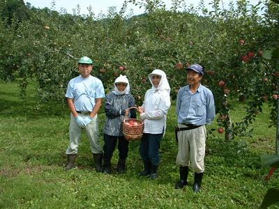 JAS有機りんご「ふじ」小玉【青森産】大箱(2段積み)