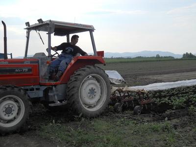 北海道から産地直送!自然栽培野菜セット【ジャガイモ30キロ/中部まで送料込み】