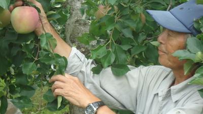 JAS有機りんご農家さんのりんご「紅玉」【青森産/有機転換期間中】小箱(1段積み)