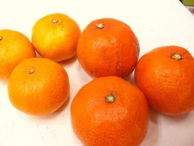 赤い果皮に濃厚な味!JAS有機認証「幻の」小原紅みかん【5キロ/香川産】