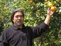 有機バレンシアオレンジ 10コセット