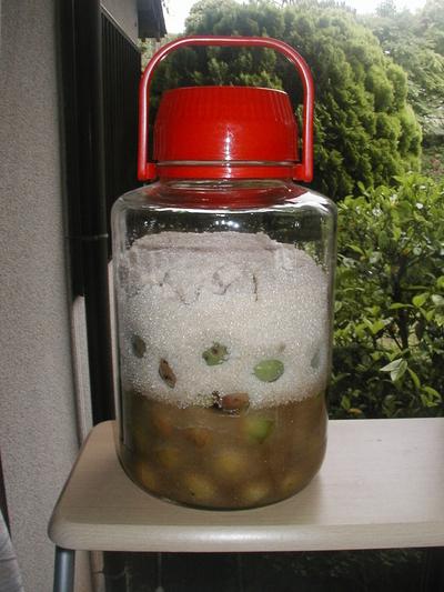 自然農法産青梅(梅酒・梅シロップ用) 1kg 【神奈川県川崎市横山農園/予約販売】