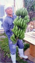 日本最期の秘境から届いた 国産天然バナナ 1kg