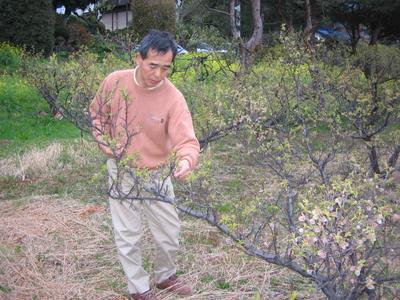 自然農法30年以上の梅で作った 横山農園の梅ジャム 220g