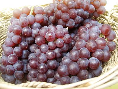 農薬・化学肥料不使用のぶどう デラウエア(種無し) 2kg【山形産】