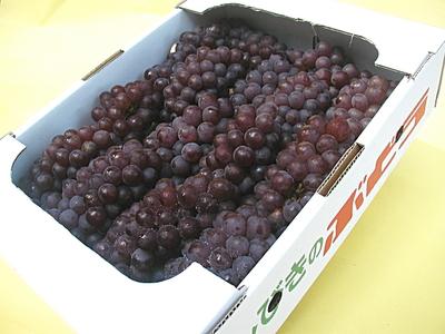 農薬・化学肥料不使用のぶどう デラウエア(種あり) 2kg【山形産】