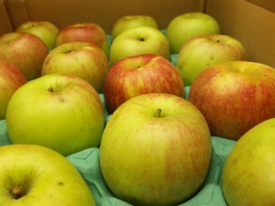 JAS有機りんご「北の幸」【青森産】大箱(2段積み)