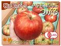 JAS有機りんご「つがる」【青森産】大箱(2段積み)
