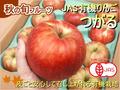 JAS有機りんご「つがる」【青森産】2個パック