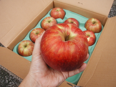 JAS有機りんご「むつ」【青森産】大箱(2段積み)