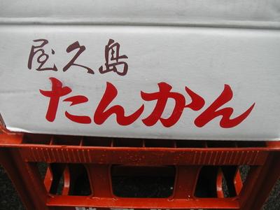 JAS有機認証!屋久島のたんかん【鹿児島県屋久島産/1キロ】