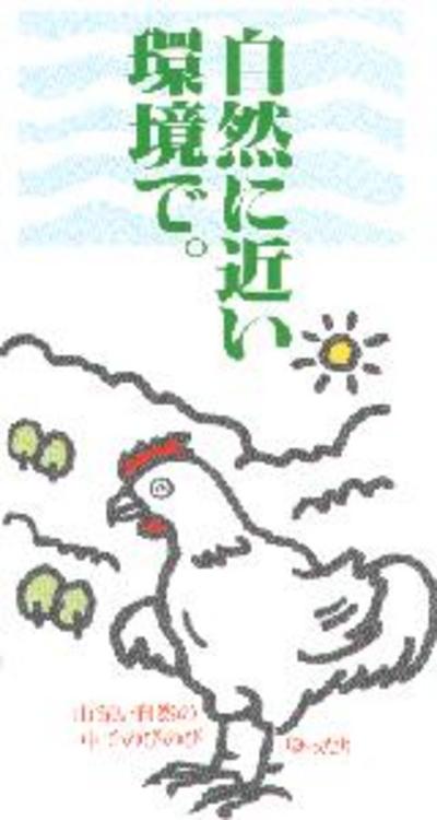 美味しくて、安全!神山鶏手羽元【300g/冷凍/イシイフーズ】