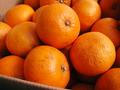春の人気の柑橘類です!JAS有機甘夏【香川・広島産/700gup】
