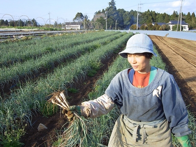 茨城産らっきょう【農薬・化学肥料不使用/1キロ】