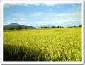 新米令和元年産!自然農法50年! 自然米「ササニシキ・ひとめぼれ」【岩手産】玄米 30kg/保管料込み・予約受付中