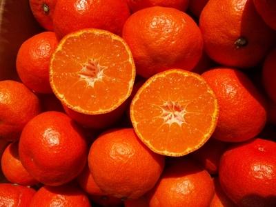 赤い果皮に濃厚な味!JAS有機認証「幻の」小原紅みかん【10キロ/香川産】