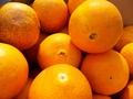 甘酸っぱくてとってもジューシー!JAS有機ネーブルオレンジ【香川産・広島産/10kg】