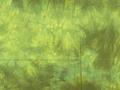 むら染め布 カットクロス50cm×50cm(緑/Green9)ハワイアンキルト・ステンドキルト・パッチワーク