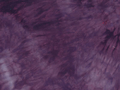 むら染め布 カットクロス50cm×50cm(紫/purple6)ハワイアンキルト・ステンドキルト・パッチワーク