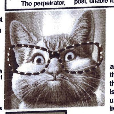 【雑貨/USAコットン/Timeless Treasures】Cat news/HH-40 カットクロス50cm×55c