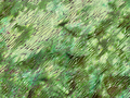 【雑貨/USAコットン/HOFFMAN(ホフマン)】HHH-2/バティック 森の中 カットクロス50cm×55cm