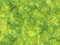 【雑貨/USAコットン/HOFFMAN(ホフマン)】HHH-3/バティック グリーンリーフ カットクロス50cm×55cm