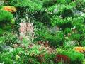 【雑貨/国産プリント/YUWA】H-114/緑の丘 カットクロス50cm×55cm
