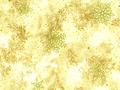 【雑貨/USAコットン/ROBERT KAUFMAN(ロバートカフマン)】C-115/クリスマスプリント布(ベージュ) カットクロス 50cm×55cm