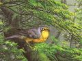 【雑貨/USAコットン/デジタルプリント】HHH-60/Bird in the Forest 50cm×55cm
