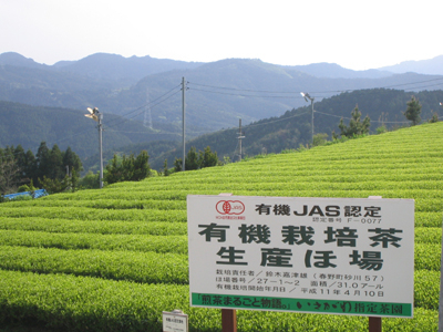 有機栽培「春野の茶」